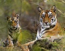 Bandhavgarh Wildlife Tours