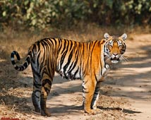 Kanha Wildlife Tours