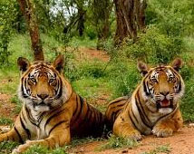 Sariska Wildlife Tour Packages