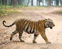 Indian Wildlife with Golden Triangle Tour