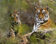 Bandhavgarh Wildlife Sanctuary Tour