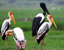 Bird Sanctuary in Bharatpur