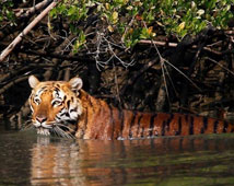 Sunderbans Wildlife Sanctuary