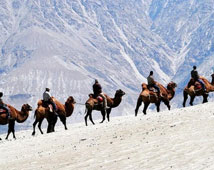 Ladakh Camel Safari Tour