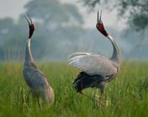 Bharatpur City Guide
