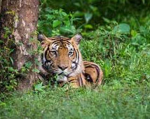 Corbett National Park Tours