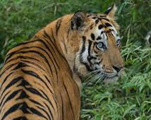 Ranthambhor Wildlife Tours